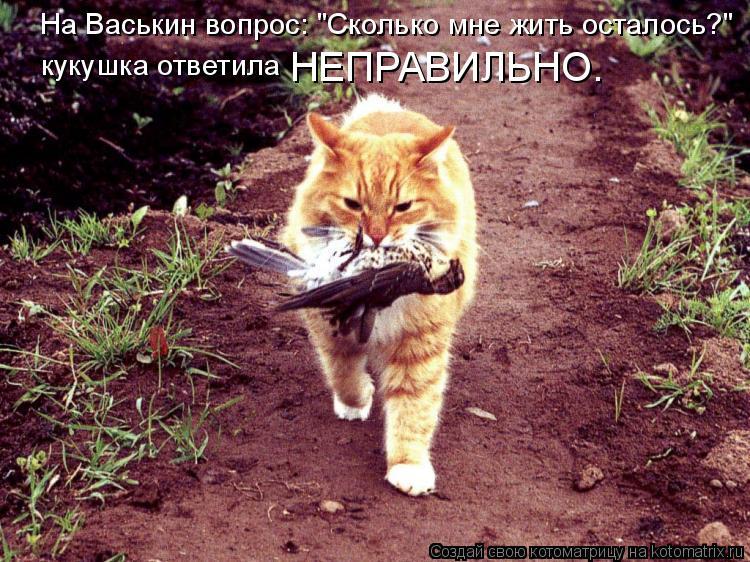 Кот с кукушкой