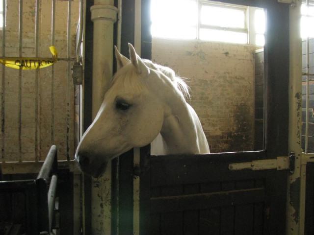 Лошади в CNE