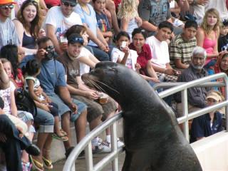 Hi! I'm a sea lion.