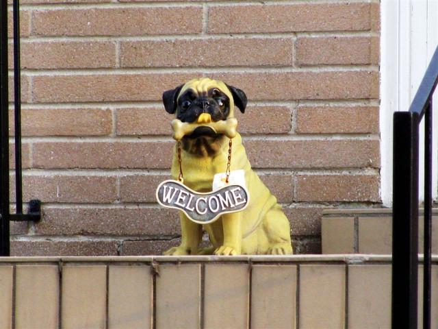 Собак ненастоящий