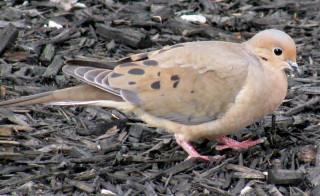 Кто знает, что это за птица?