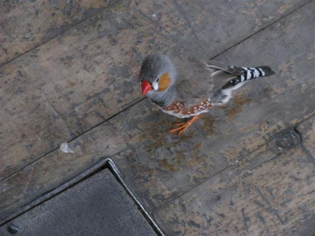 Самый наглый птиц, лез под ноги
