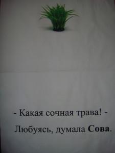 сова читлака2