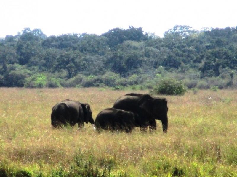 IMG_4372-Слоны