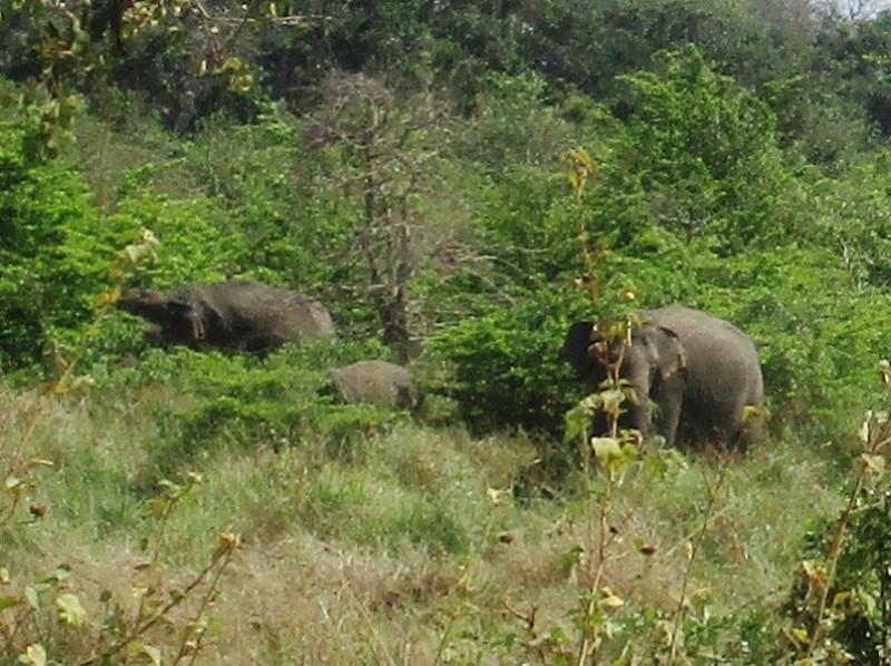 IMG_4376-Слоны4