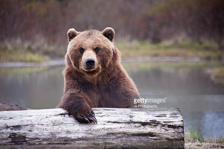 Bear-Bar