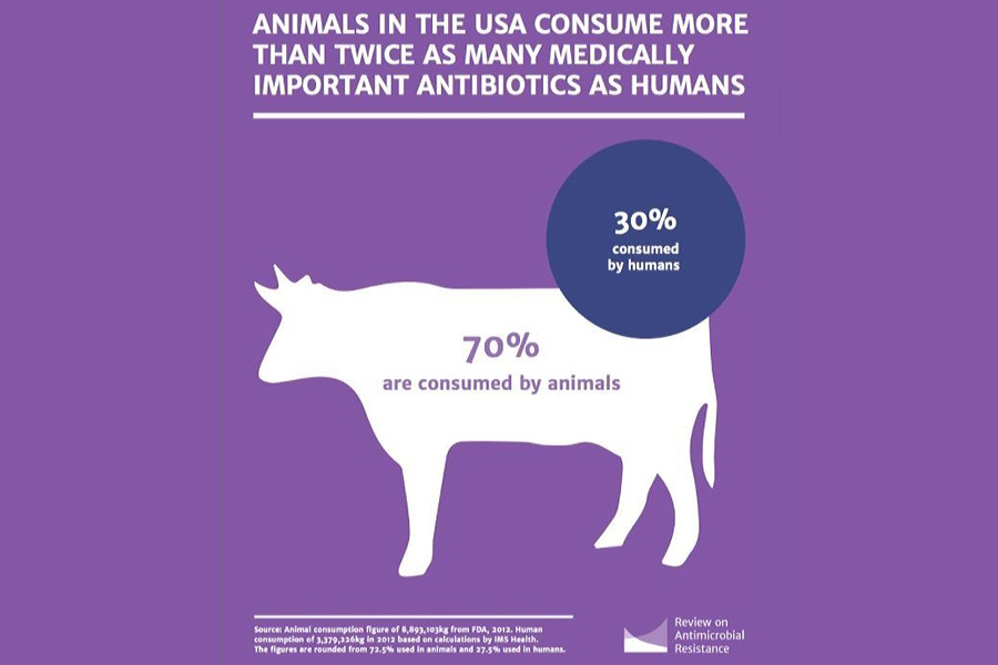 Animals-Antibiotic-US