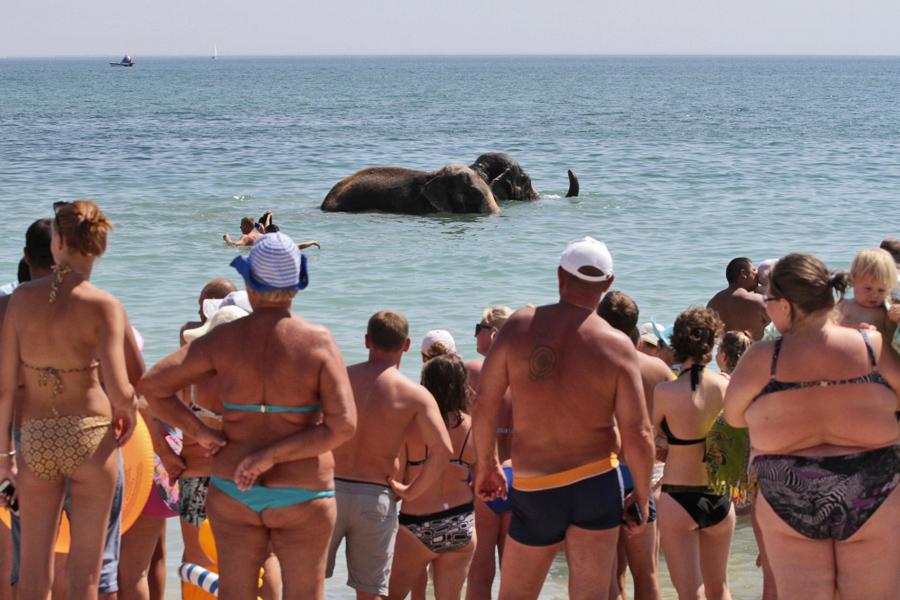 Crimea-Elephant
