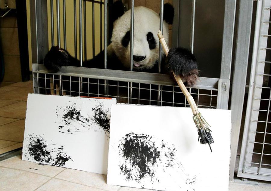 Panda_Reuters_Pictures