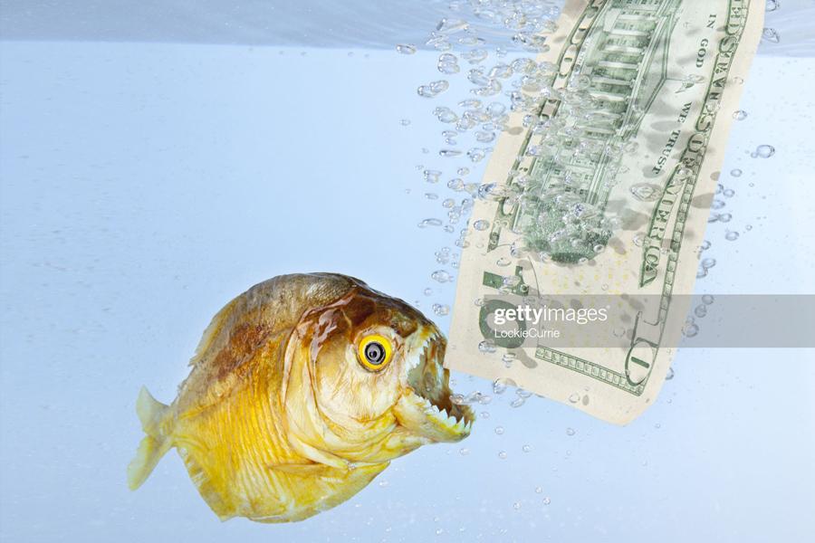 Fish-Dollar