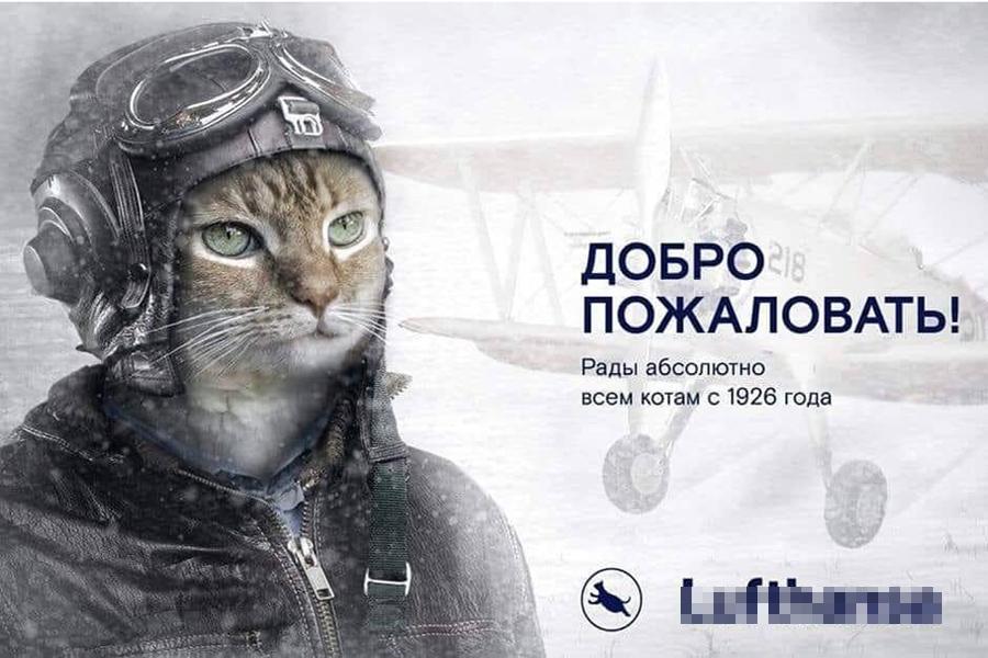 Cat-Aero