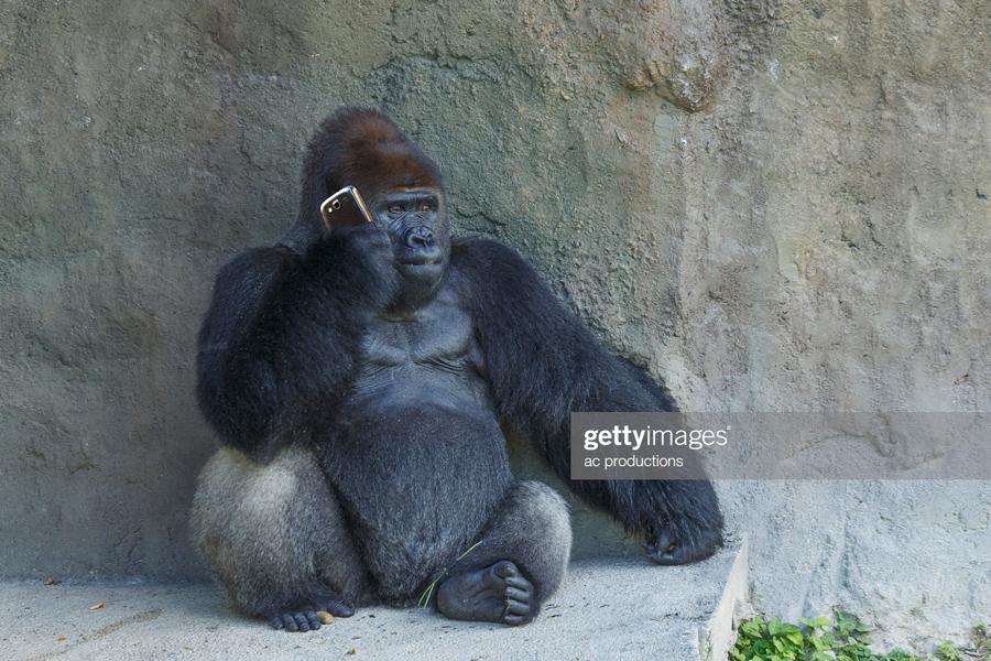 О красивых уроках в защиту «великого и могучего» Gorilla