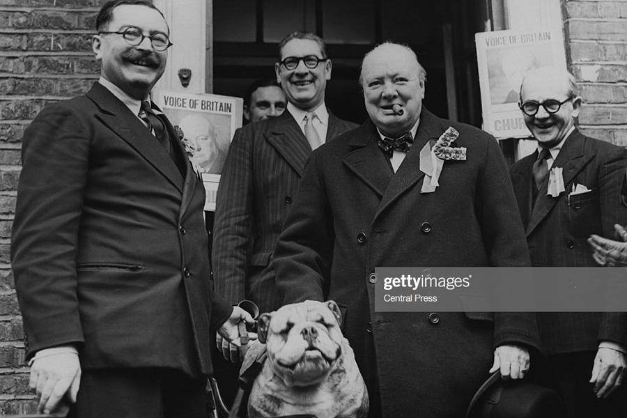 Churchill-Bulldog