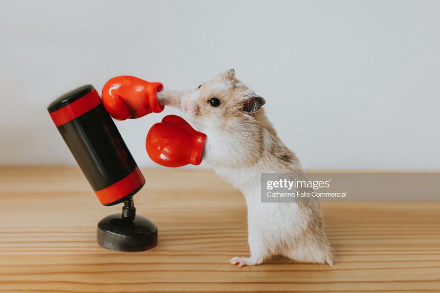 Hamster-Enemy