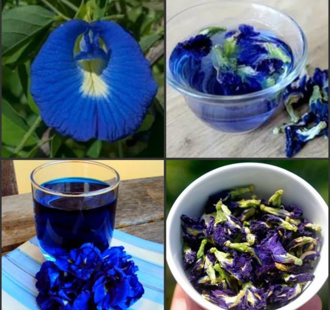Чай из цветков клитории очень популярен в Тайланде