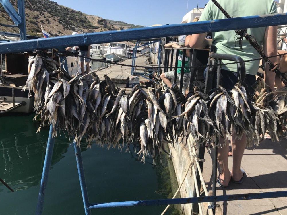 Всем по вязанке сушеной рыбки!