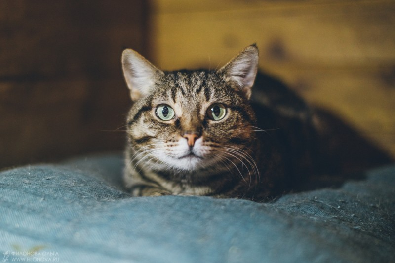 Кошка Мона