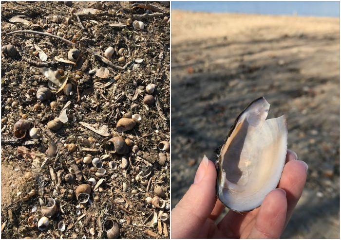 Дно усеяно раковинами моллюсков