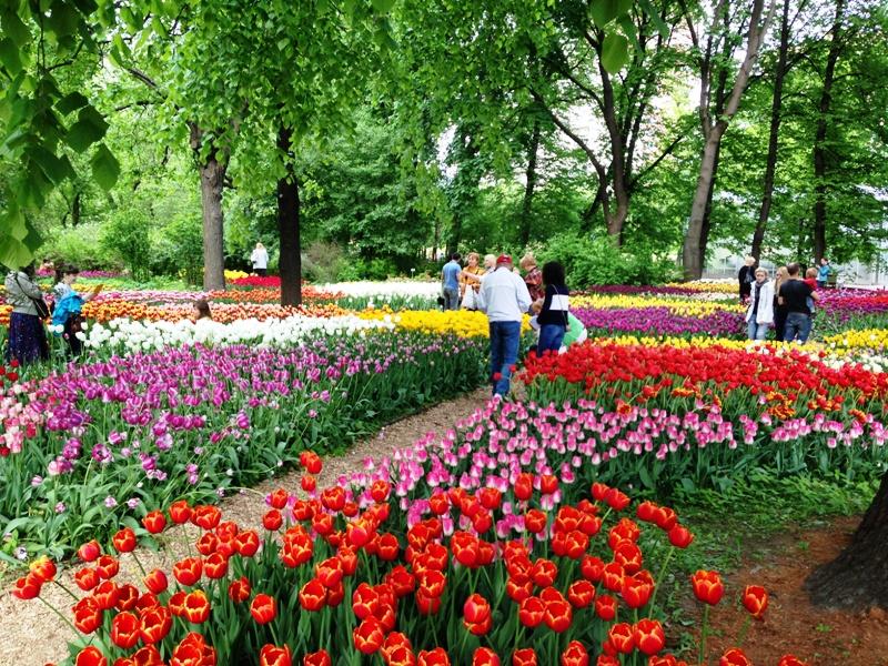 Весенний фестиваль в Аптекарском огороде