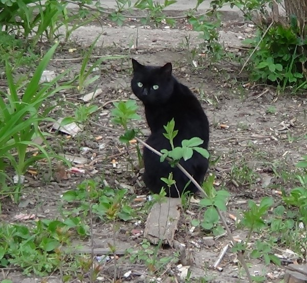 симфи-кот1 - копия