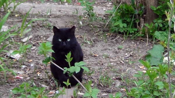 симфи-кот2 - копия