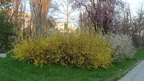 симфи-краски весны - копия
