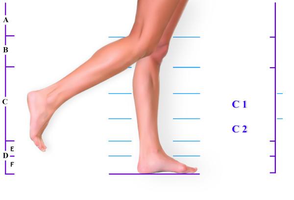 Голень где на ноге находится