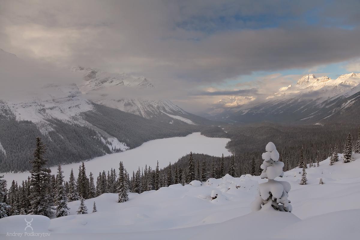 Озеро Peyto Lake. Национальный парк Банф. Канадские Скалистые горы.