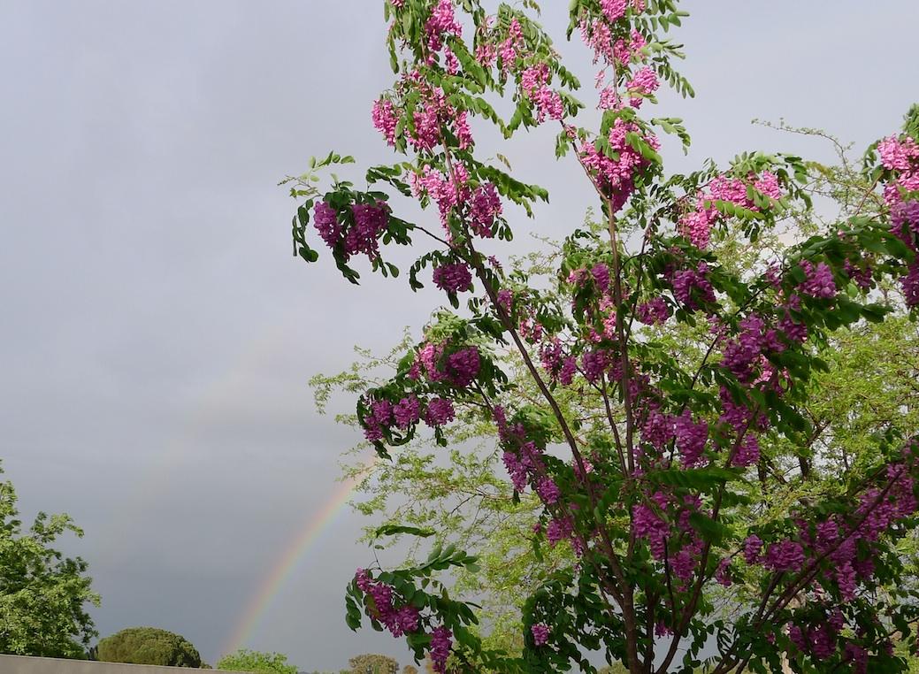 rainbow_3