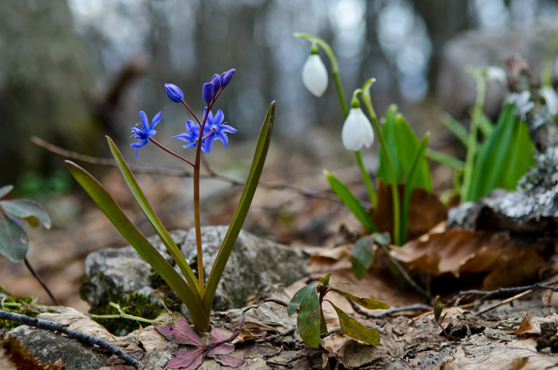 Весенние лесные цветы краснодарского края фото