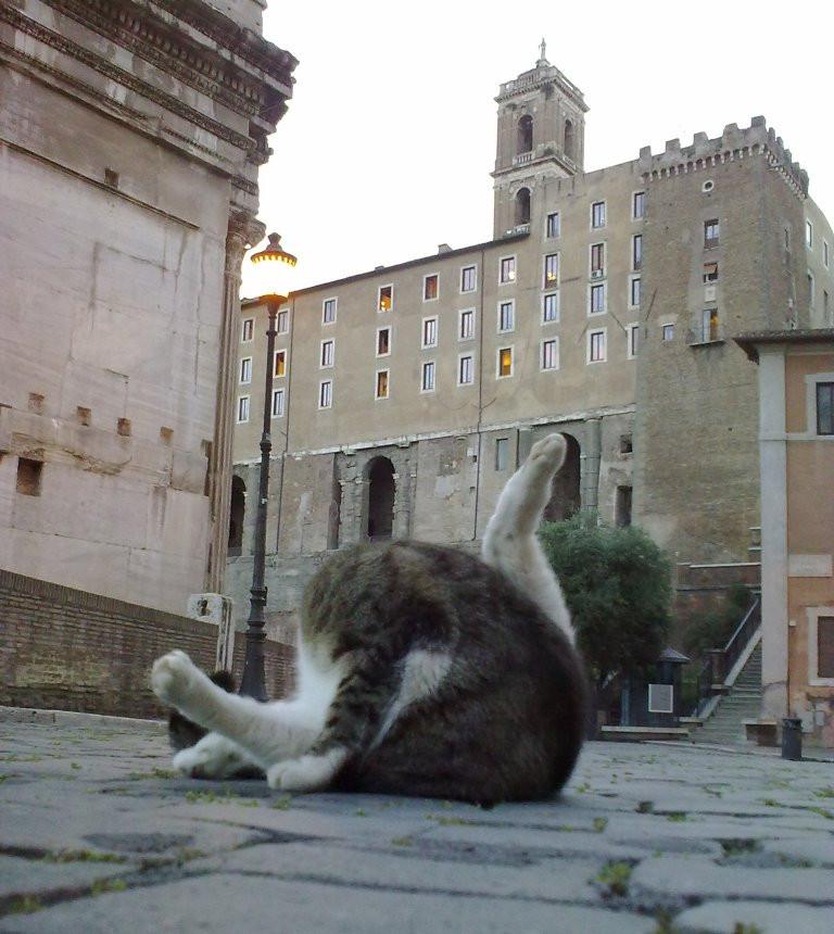 Кот Вечного Города