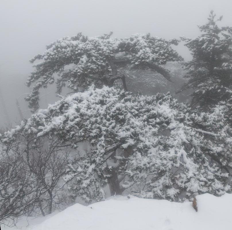 IMG_2743-Panorama