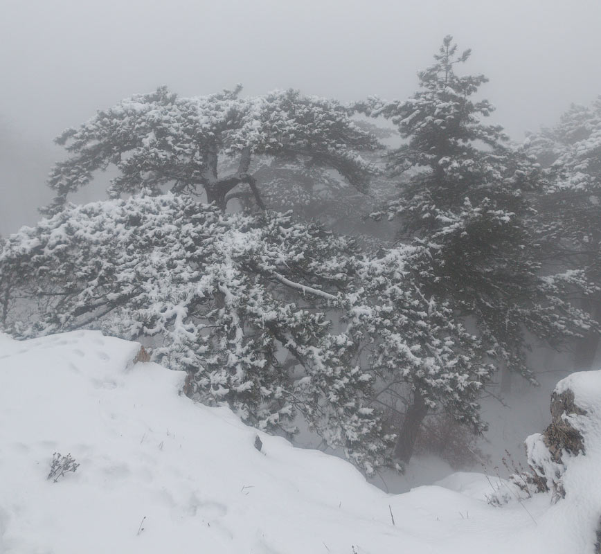 IMG_2747-Panorama