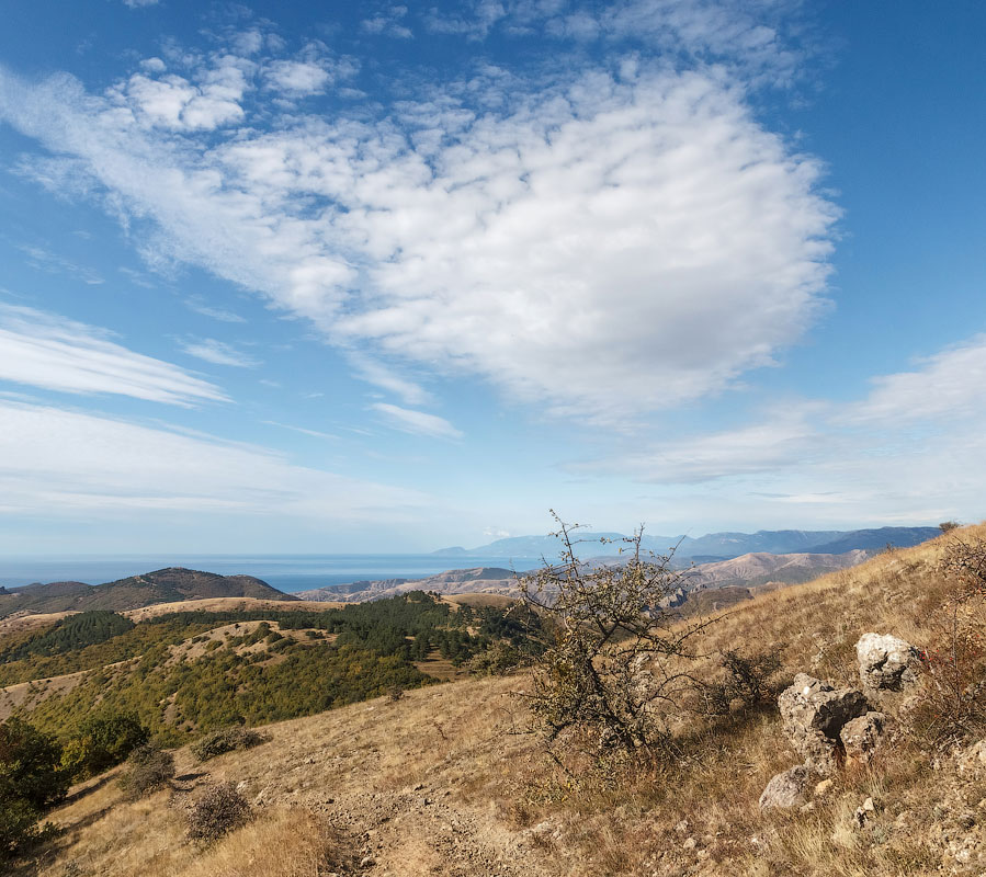 IMG_4352-Panorama