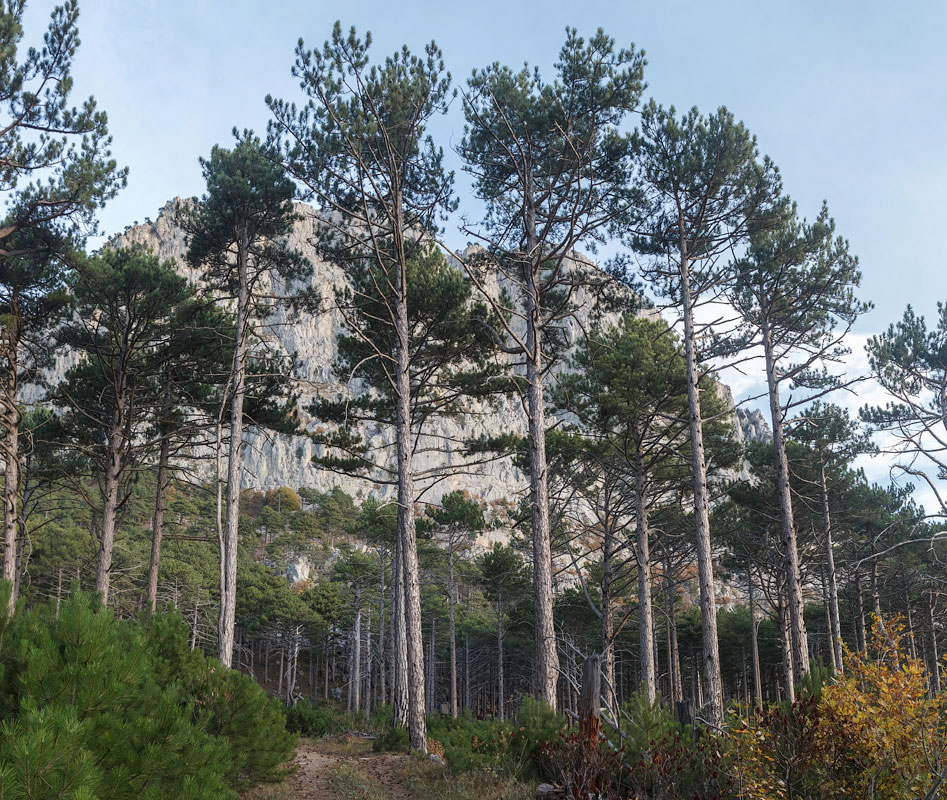 IMG_8978-Panorama