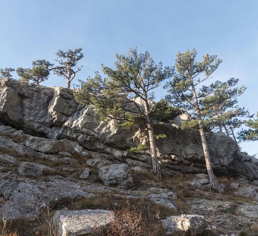 IMG_9021-Panorama