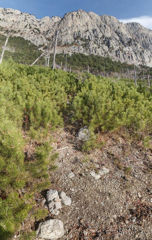 IMG_9116-Panorama