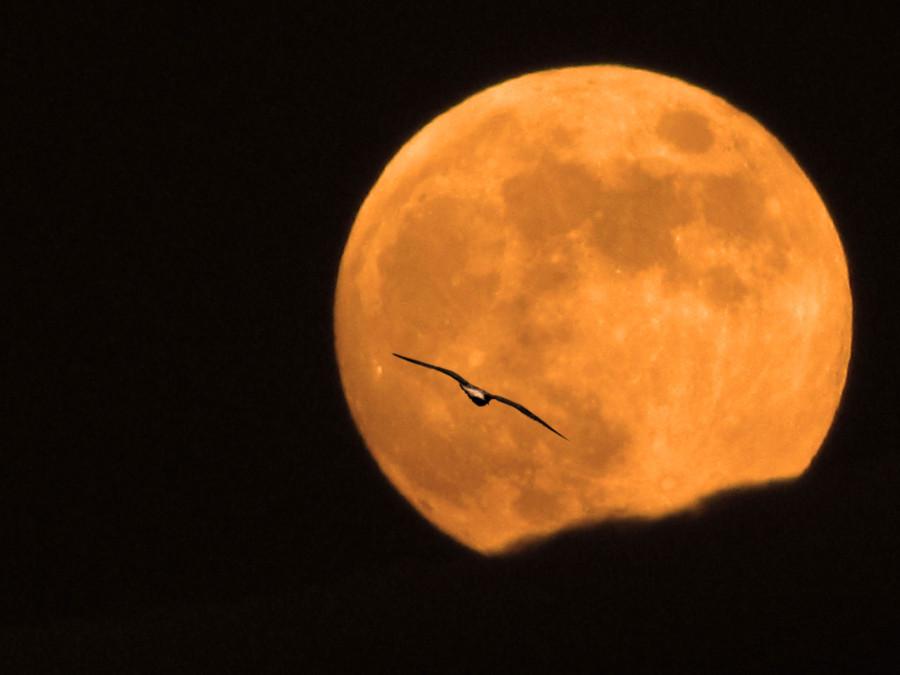 луна-и-чайка-2048