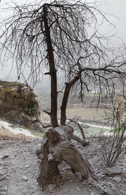 IMG_7797-Panorama