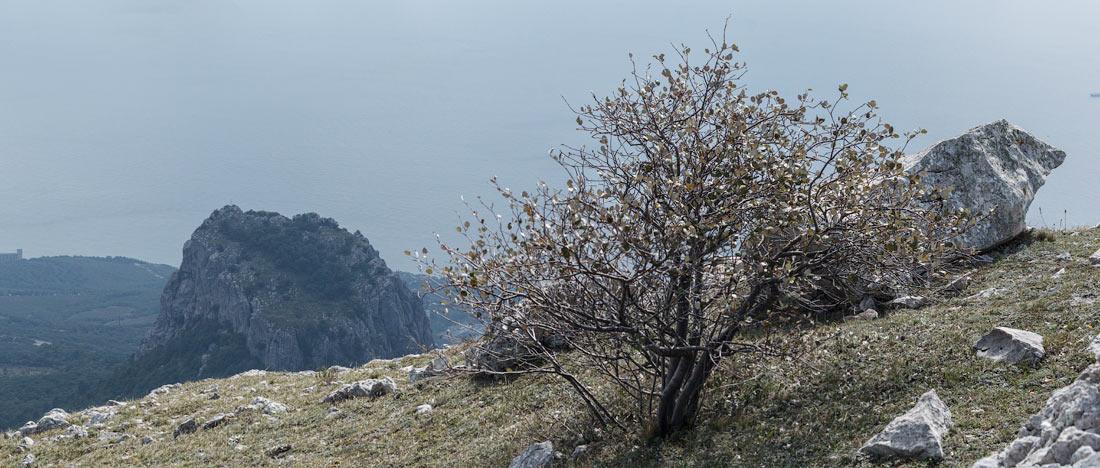 IMG_6357-Panorama