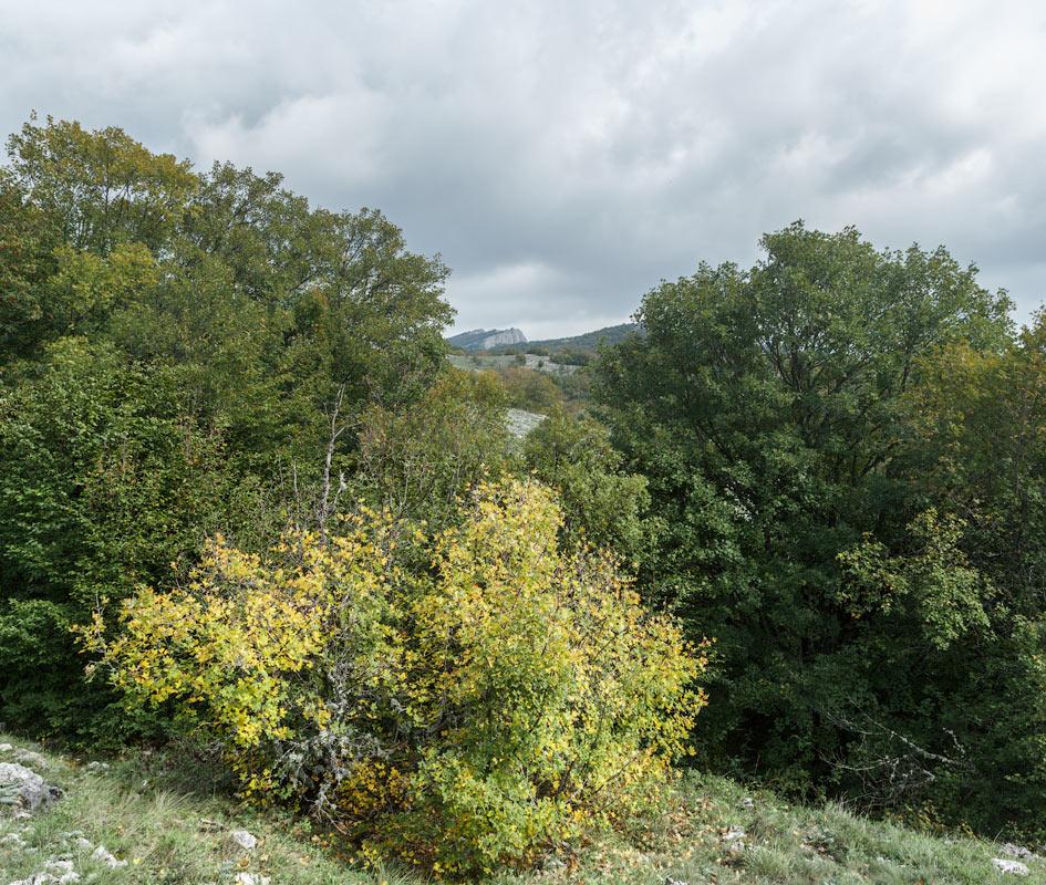 IMG_6398-Panorama
