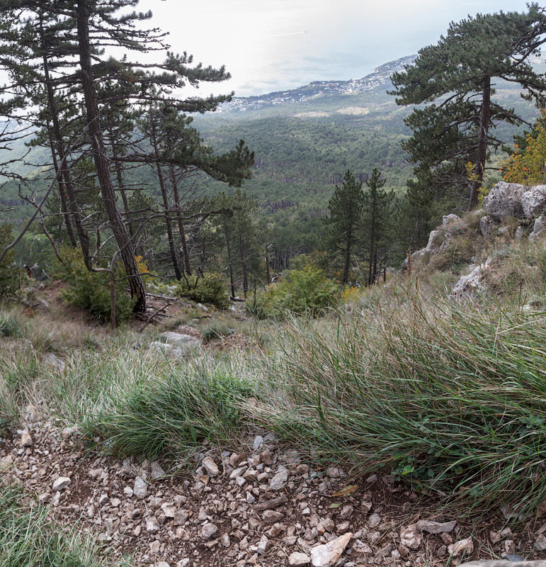 IMG_7384-Panorama