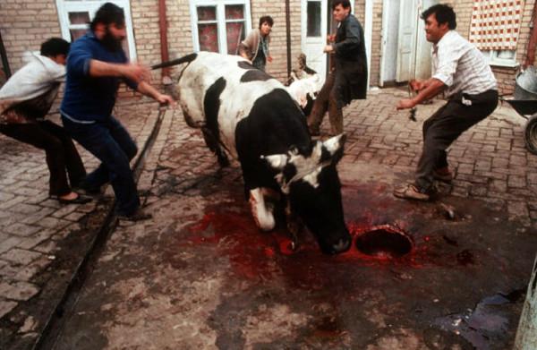 54 Пинхасов, Самарканд, убийство коровы перед свадьбой, 1988