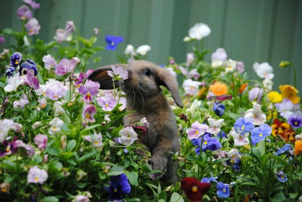 заяц нюхает цветы