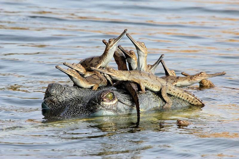 крокодил и дети