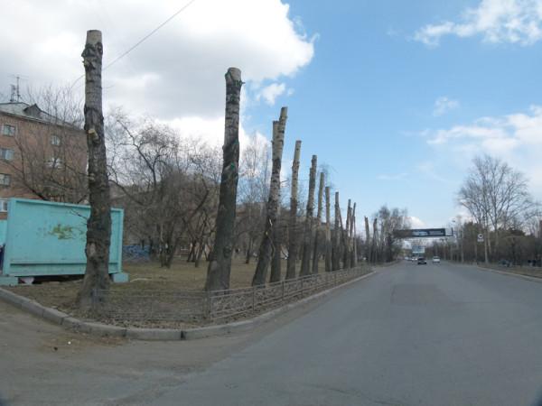 Варварская обрезка деревьев на ул. Киренского в Красноярске.  Фото: Ольга Смирнова