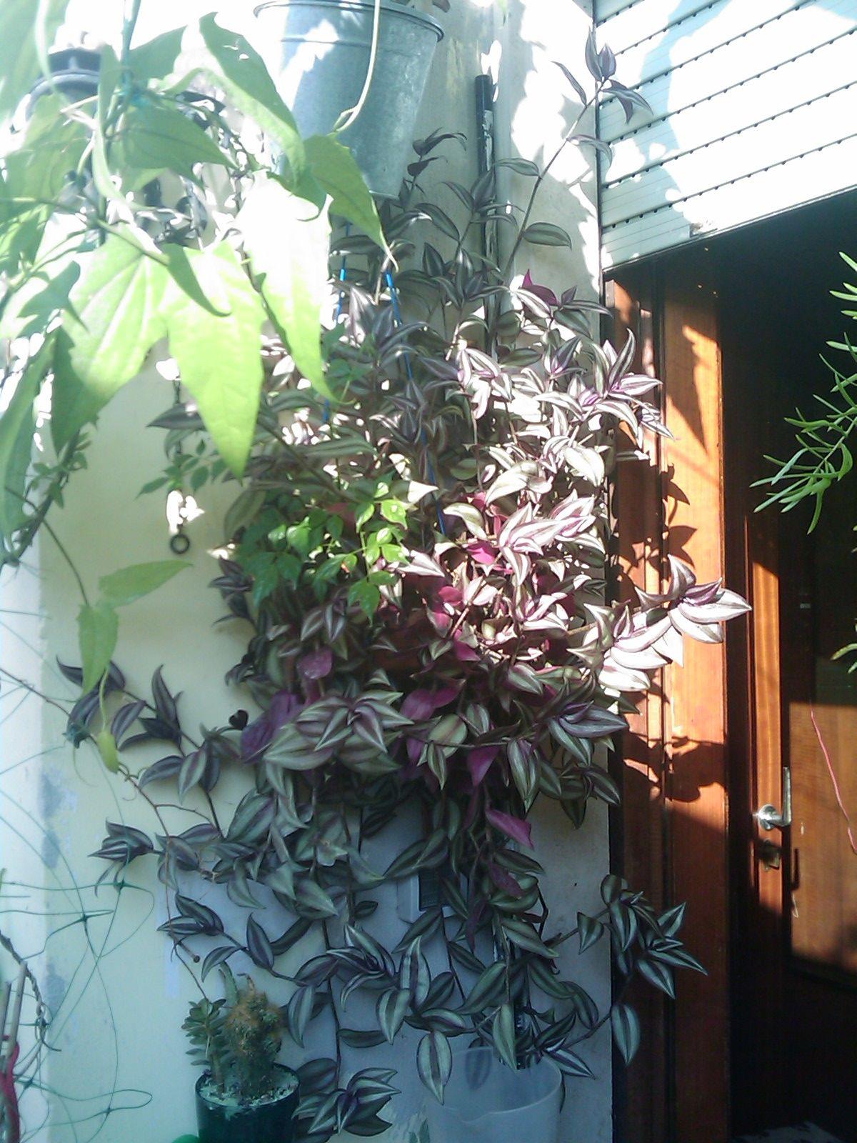 Растения сад