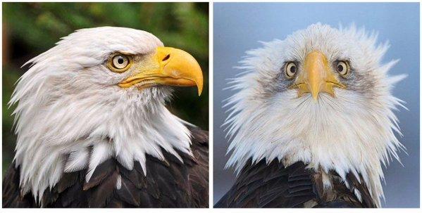 Американский орел под кайфом