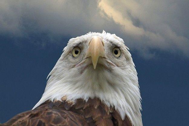 Американский орел глядит на современность