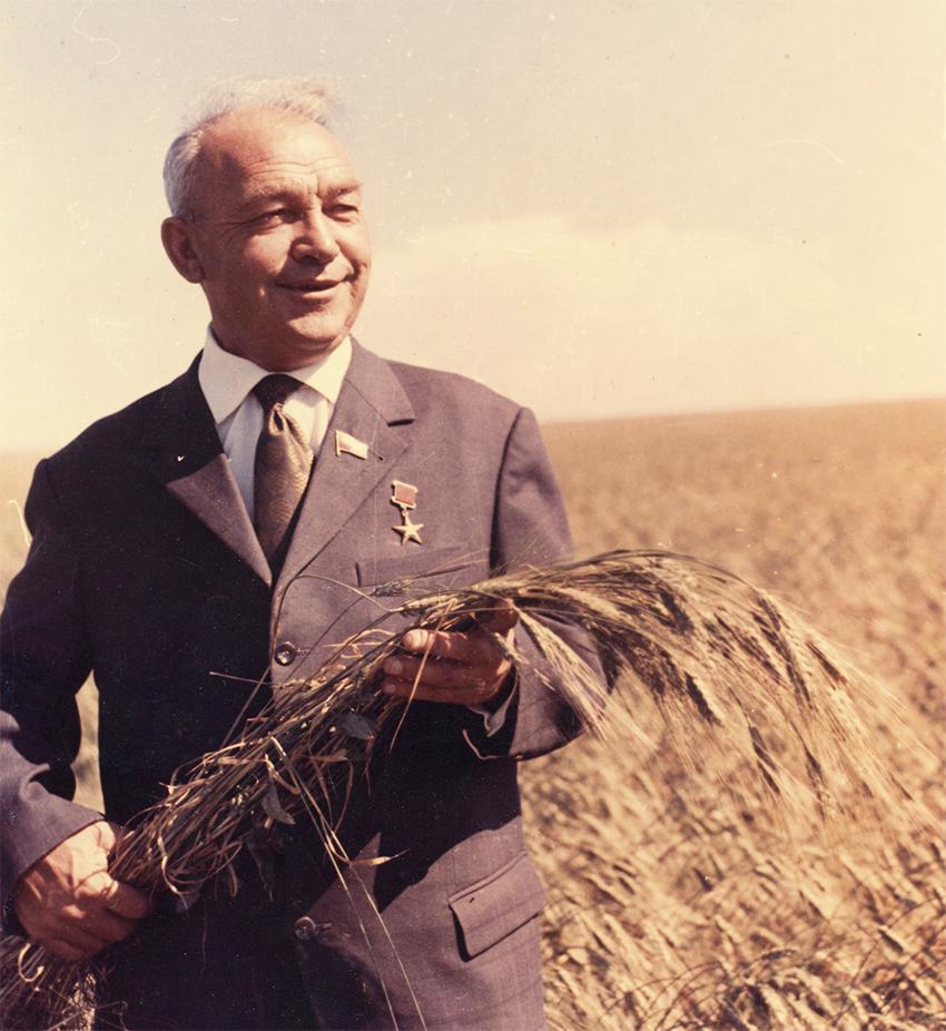 Илья Яковлевич Шумаков на пшеничном поле.